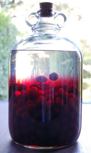 Damson Gin v1